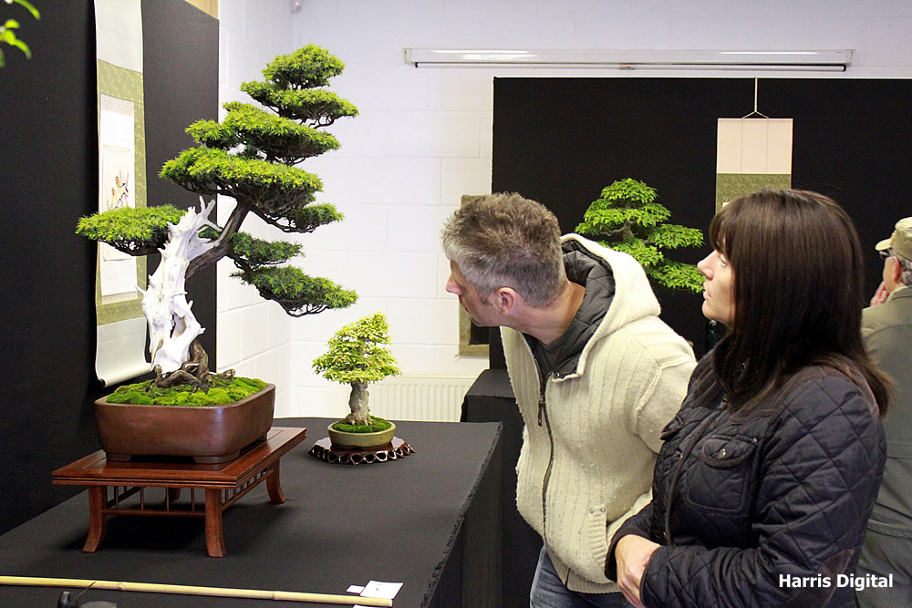 autumn-bonsai-show-at-capel-manor-college-x4