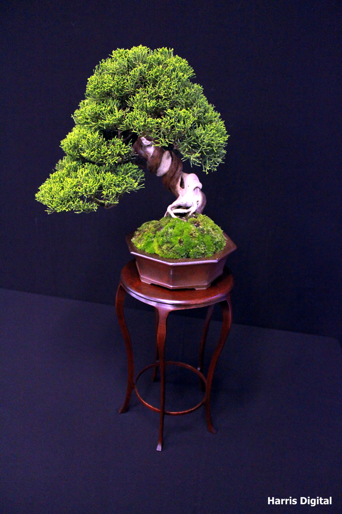 autumn-bonsai-show-at-capel-manor-college-x8