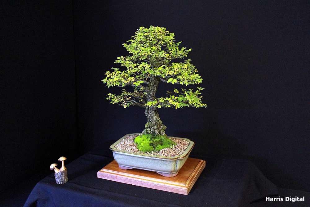 autumn-bonsai-show-at-capel-manor-college-x9