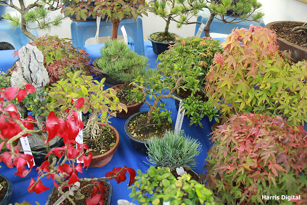 autumn-bonsai-show-at-capel-manor-college-x902