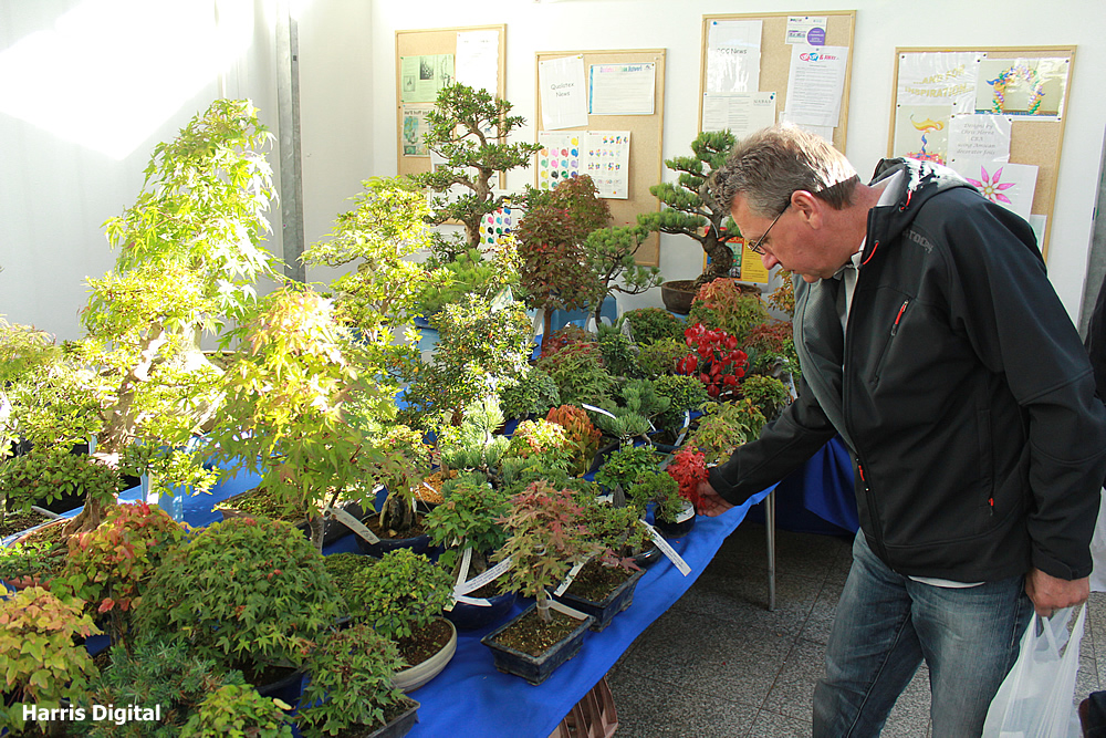 autumn-bonsai-show-at-capel-manor-college-x903