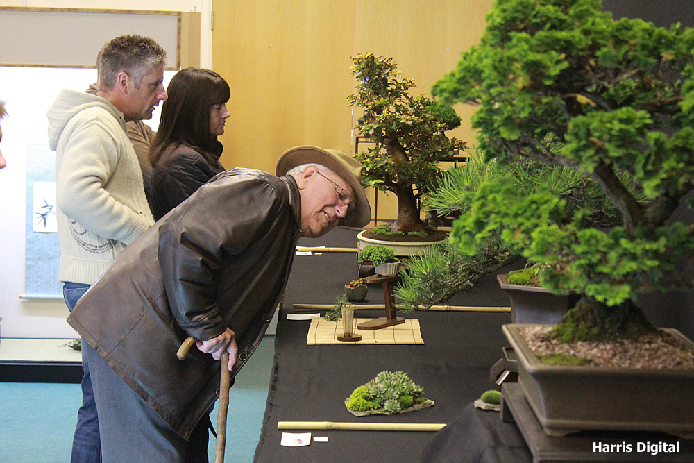 autumn-bonsai-show-at-capel-manor-college