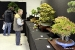 autumn-bonsai-show-at-capel-manor-college-x6