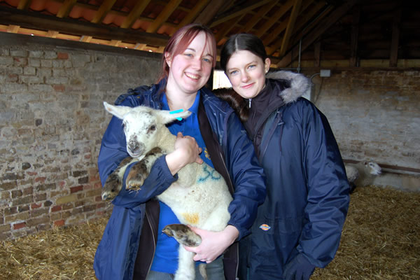 lambing-at-forty-hall-farm-05