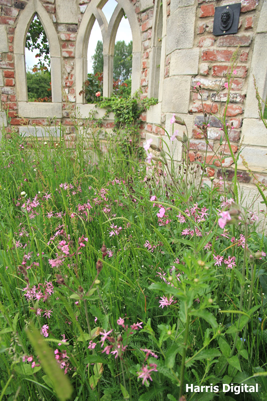 wildflower-turf-at-capel-manor-college-019