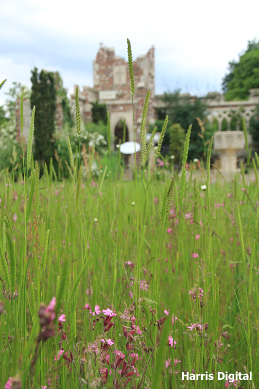 wildflower-turf-at-capel-manor-college-020