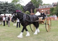 Herts Heavy Horse Show at Capel Manor College