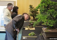 bonsai-show-at-capel-manor-college