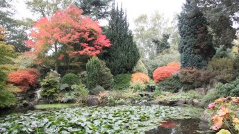 NGS – Gardens open for Charity