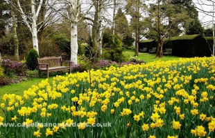 Spring has sprung at Capel Manor Gardens