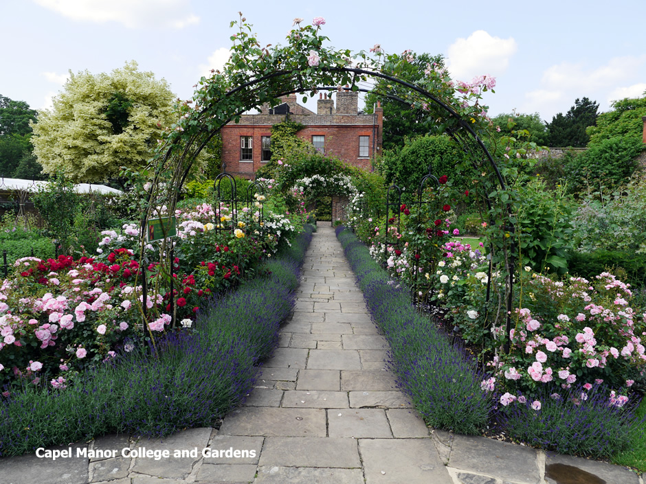 Roses in the Walled Garden at Capel Manor Gardens