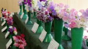 Mr Fothergill's Sweet Pea Competition