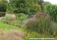 Ornamental Grasses at Capel Manor Gardens