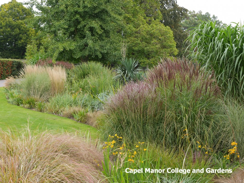 Looking great in the gardens this october capel manor for Garden ideas with ornamental grasses