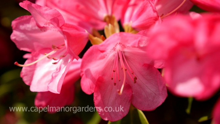 Looking great in the gardens in May
