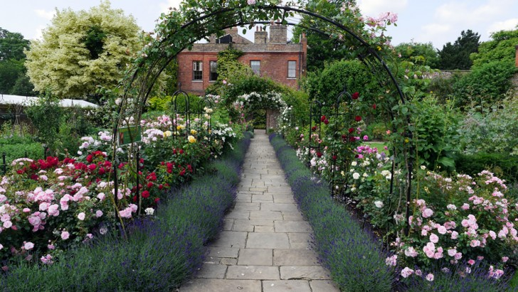 Looking great in the gardens this week