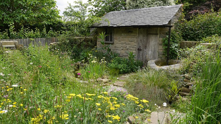 The Naturally Dry Garden