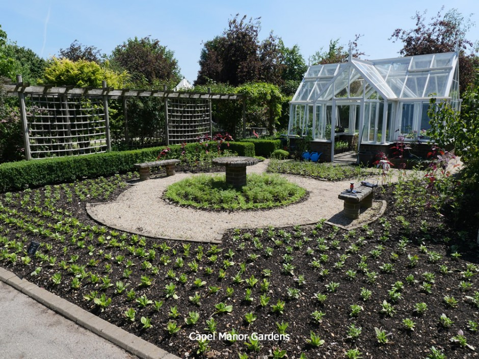 Newly planted with summer bedding - 11th June 2015