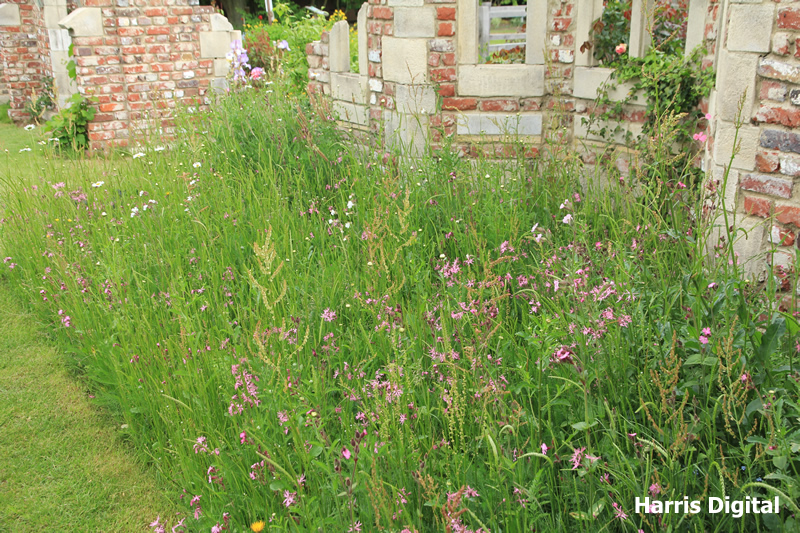 wildflower-turf-at-capel-manor-college-006