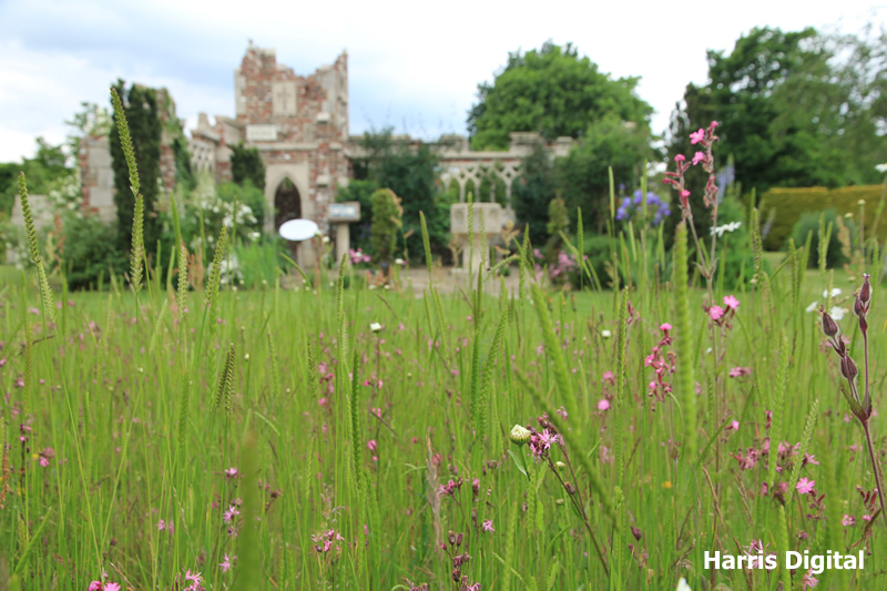 wildflower-turf-at-capel-manor-college-012