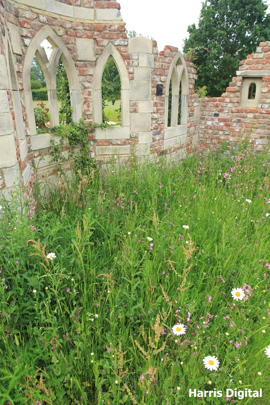 wildflower-turf-at-capel-manor-college-022