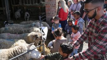 Lambing Weekend at Forty Hall Farm